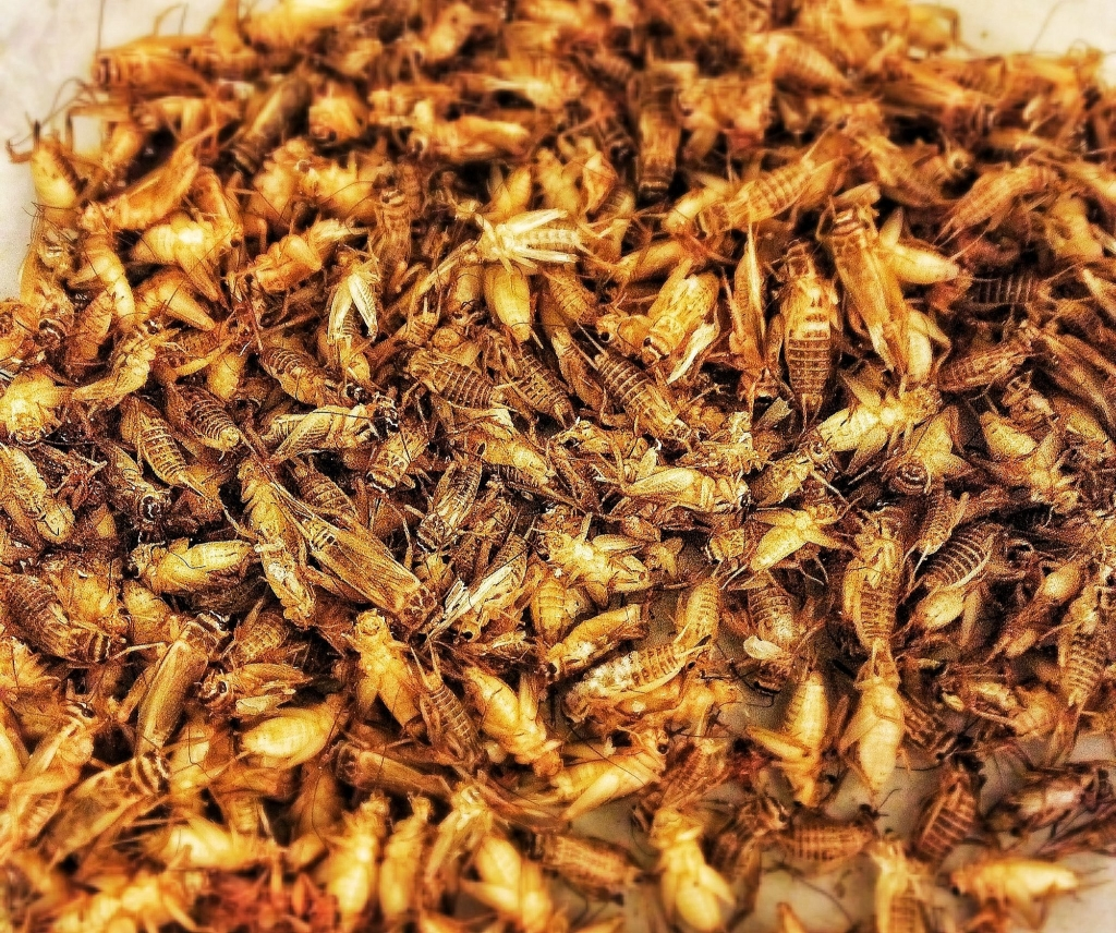 Eating Insects Tasting